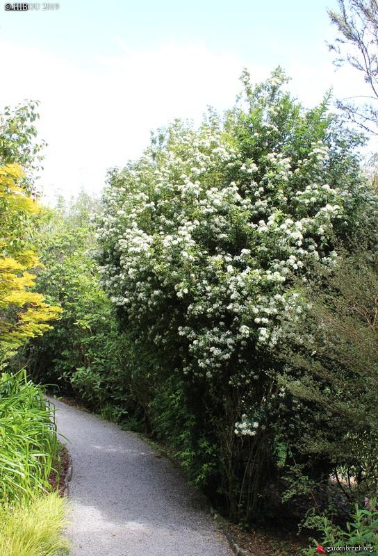 Irlande - Jardins d'Ilnacullin  - Page 2 GBPIX_photo_812222