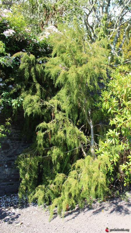 Irlande - Jardins d'Ilnacullin  - Page 2 GBPIX_photo_813668
