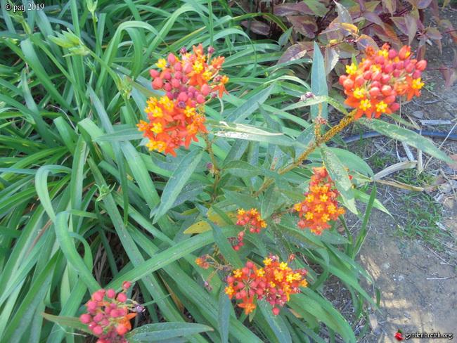 Les botanistes  - Page 5 GBPIX_photo_814675