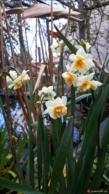 Jardins d'hiver GBPIX_photo_819733