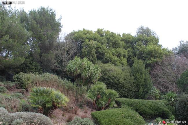 Cinnamomum camphora - camphrier - Page 5 GBPIX_photo_821121