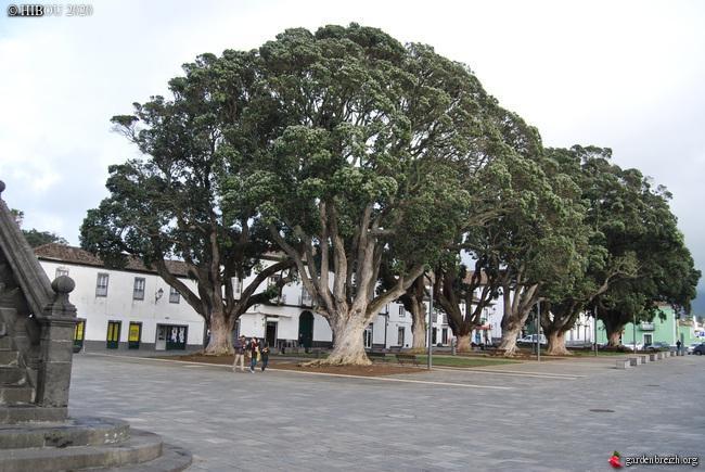 Portugal - Archipel des Açores - Ilha de São Miguel GBPIX_photo_822679