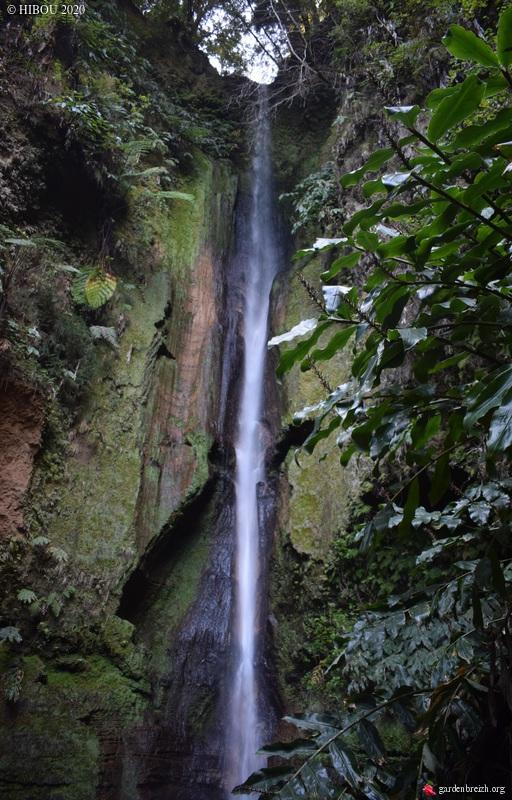 Portugal - Archipel des Açores - Ilha de São Miguel - Page 3 GBPIX_photo_825690
