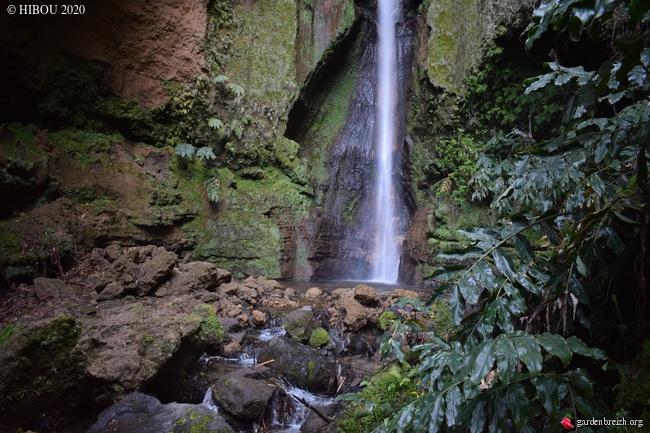 Portugal - Archipel des Açores - Ilha de São Miguel - Page 3 GBPIX_photo_825692