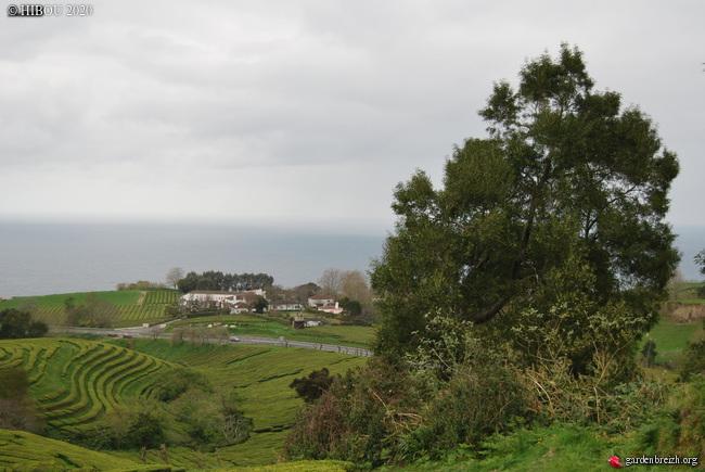 Portugal - Archipel des Açores - Ilha de São Miguel - Page 3 GBPIX_photo_826935