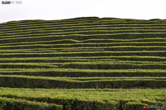 Portugal - Archipel des Açores - Ilha de São Miguel - Page 3 GBPIX_photo_826940
