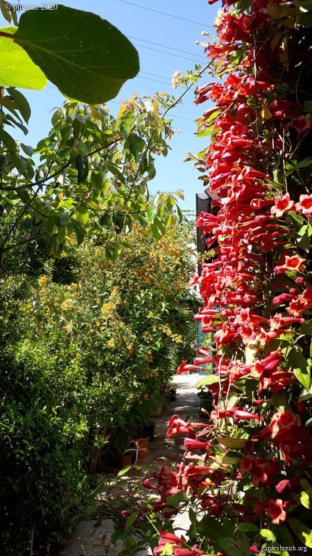 Onze, dix, neuf, .... tous au jardin !! GBPIX_photo_828226