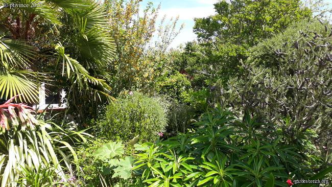Onze, dix, neuf, .... tous au jardin !! GBPIX_photo_828229