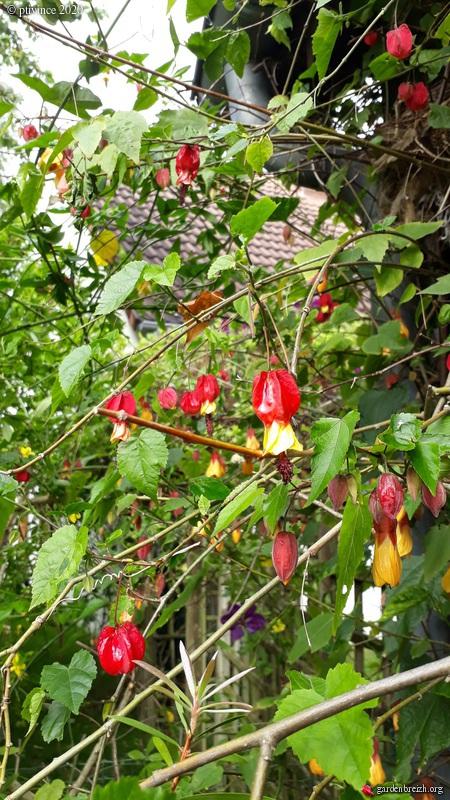 Onze, dix, neuf, .... tous au jardin !! GBPIX_photo_828231