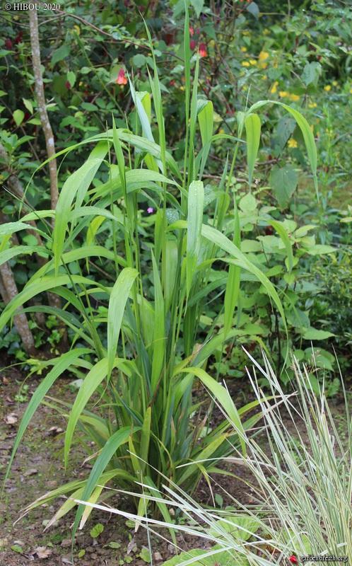 Trois plantes herbacées à deviner (trouvées) GBPIX_photo_829953