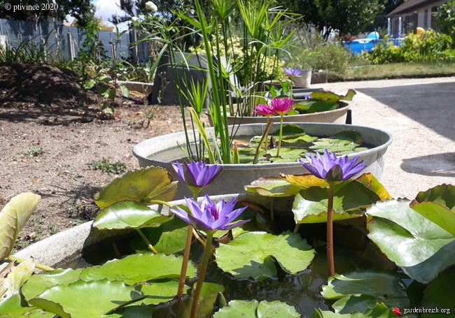 jardins de soleil - Page 2 GBPIX_photo_832900