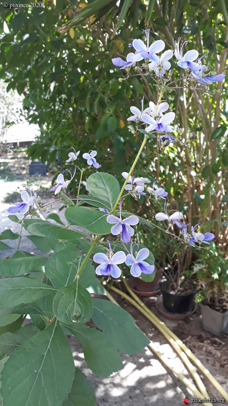 jardins de soleil - Page 2 GBPIX_photo_832903