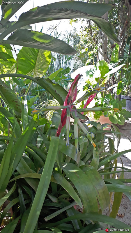 jardins de soleil - Page 2 GBPIX_photo_832904