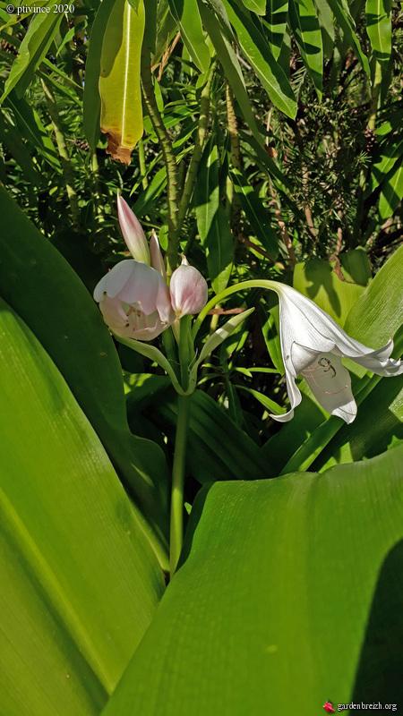 jardins de soleil - Page 2 GBPIX_photo_832905