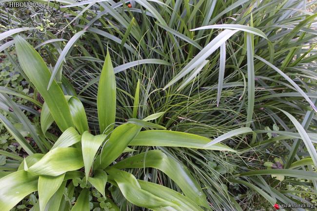 Trois feuilles rubanées à deviner (trouvées) GBPIX_photo_835958