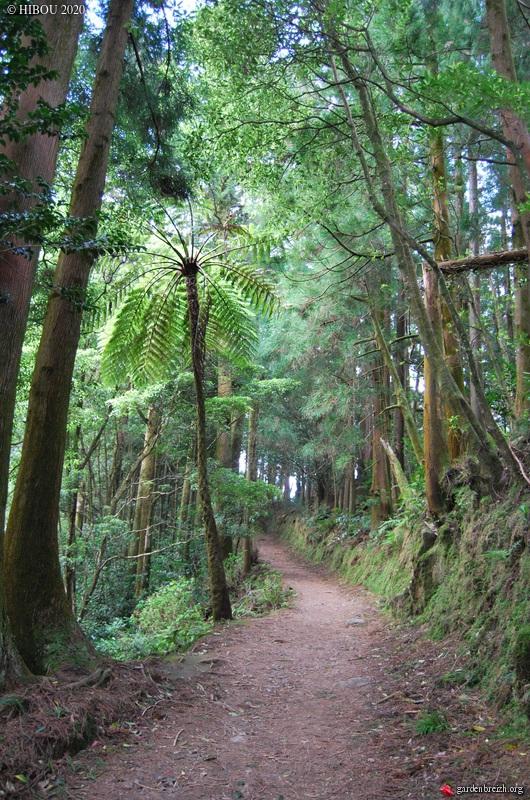 Portugal - Archipel des Açores - Ilha de São Miguel - Page 4 GBPIX_photo_836202