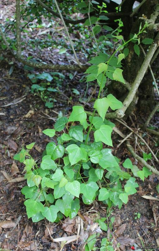 Trois devinettes sans fleurs (trouvées) GBPIX_photo_839357