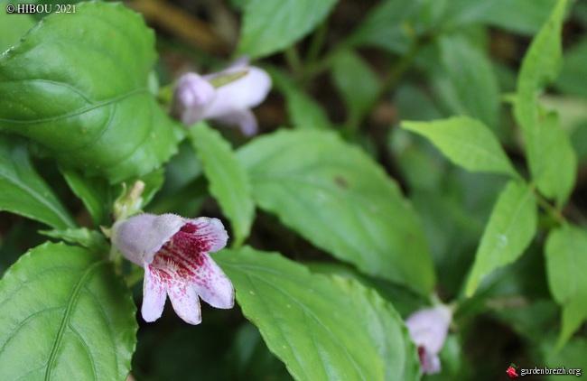 Trois devinettes fleuries (trouvées) GBPIX_photo_839358