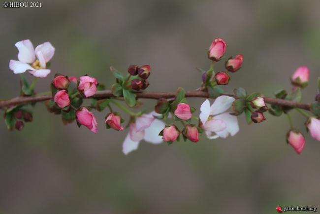 Trois devinettes fleuries (trouvées) GBPIX_photo_839362