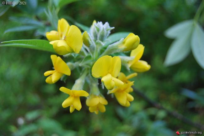 Trois devinettes fleuries (trouvées) GBPIX_photo_839363