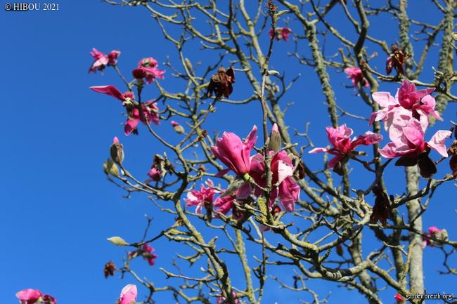 (44) Parc Floral de la Beaujoire - Nantes GBPIX_photo_839552