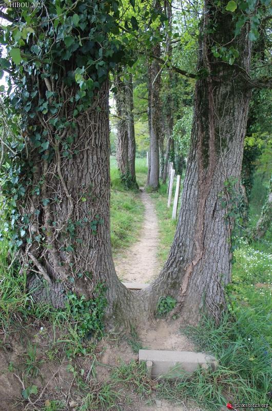 Quercus pedonculatus - chêne pédonculé GBPIX_photo_843183