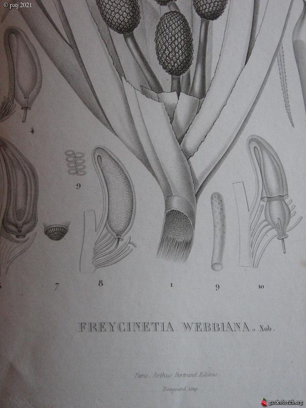 Les botanistes  - Page 6 GBPIX_photo_844196
