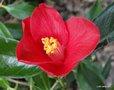Floraisons de janvier - Page 3 GBPIX_vignette_452080