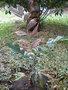 L'eau et les gouttes d'eau GBPIX_vignette_477555