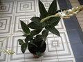 floraisons des orchidées - Page 22 GBPIX_vignette_545825