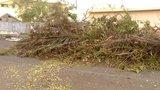 apres cyclone GBPIX_vignette_613252