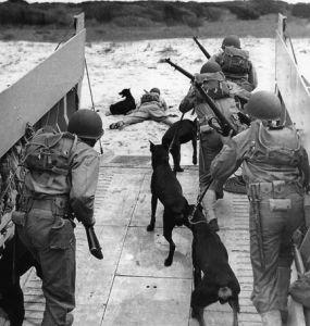 Devil's Dog : Les chiens de l'USMC dans le Pacifique  Crbst_dog2_5b1_5d