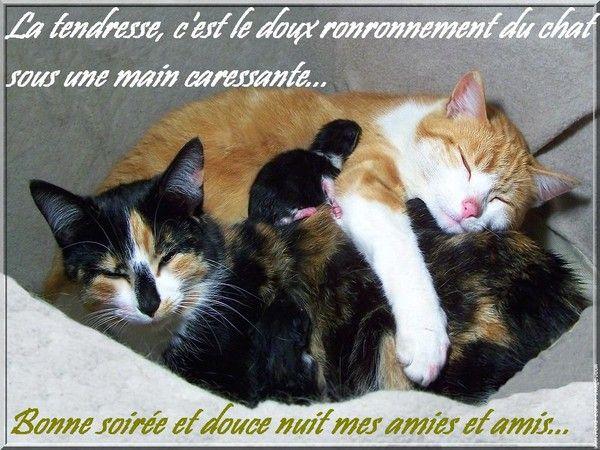 bonne nuit !!! - Page 2 4d46b4a7