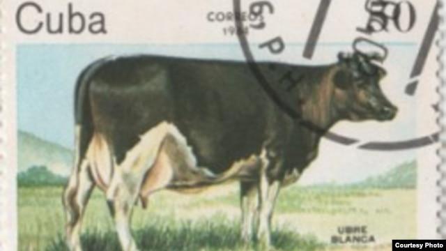 Vacche sacre ..(Ubre Blanca) E3E3A500-FDA0-4853-8281-9B25C5EC2E7C_w640_r1_s_cx0_cy5_cw0