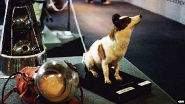 Životinjski astronauti: Stvarni pioniri svemirskih misija FBD8EDD5-B3B4-48D7-A83B-79D9563F4036_w640_r1_s