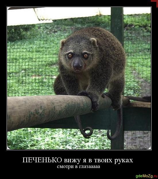 Забавные животные и птицы. - Страница 4 PECHENKO_vizhu_ya_v_tvoih_rukah