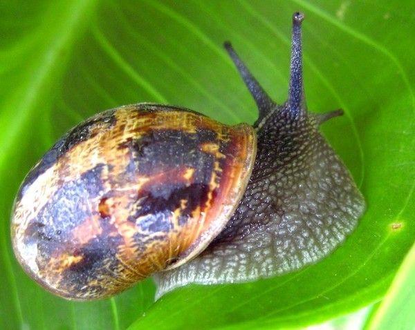 Les escargots 7b671824