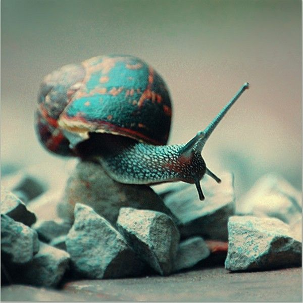 Les escargots 81dad33a