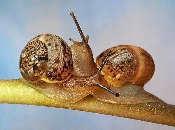 Les escargots D43b297f
