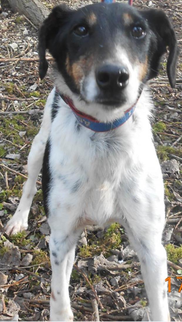AXIA -fox terrier à poil court 13 ans - Fondation Bardot Image1_1543922025