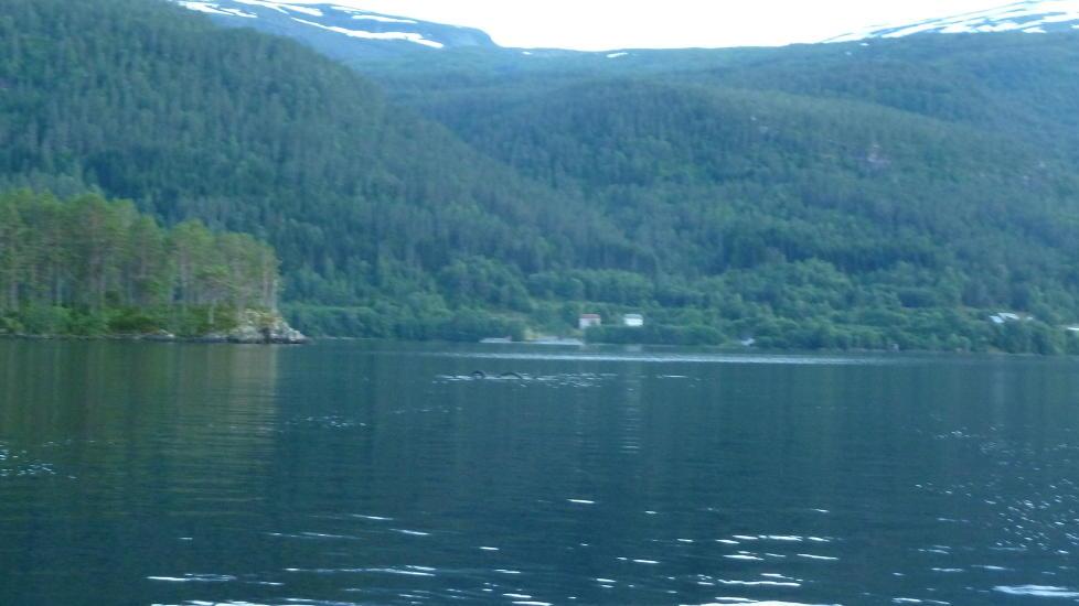 Un serpent de mer en Norvège ? 978x