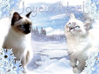 c'est noel  Noel-083