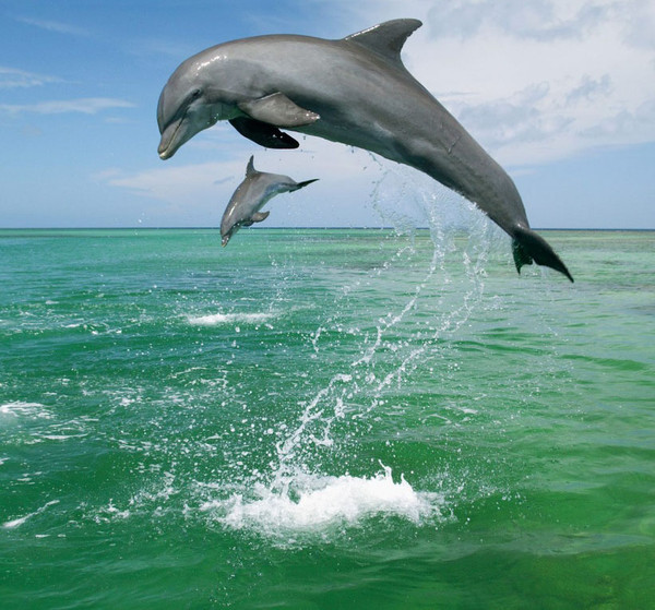 Les dauphins et les orques 9953c5c8