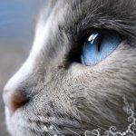 Аватары с животными - Страница 2 401977547