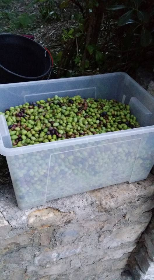 Atelier en sous sol :)  Olives