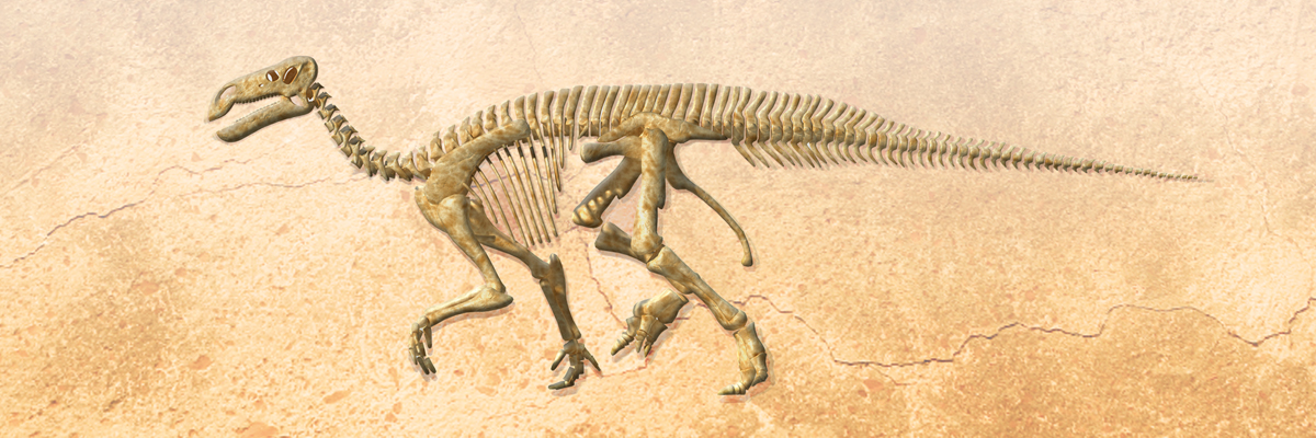 Fosili - Page 5 Nt-fossils-header