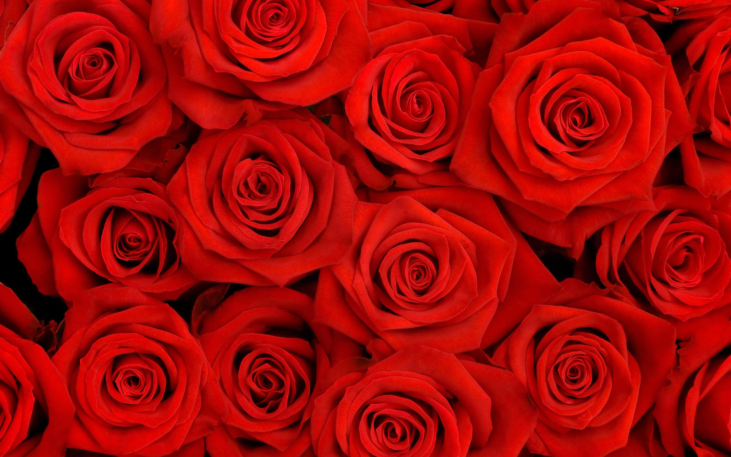 Toredat Naistepäeva Naised! Roses-04
