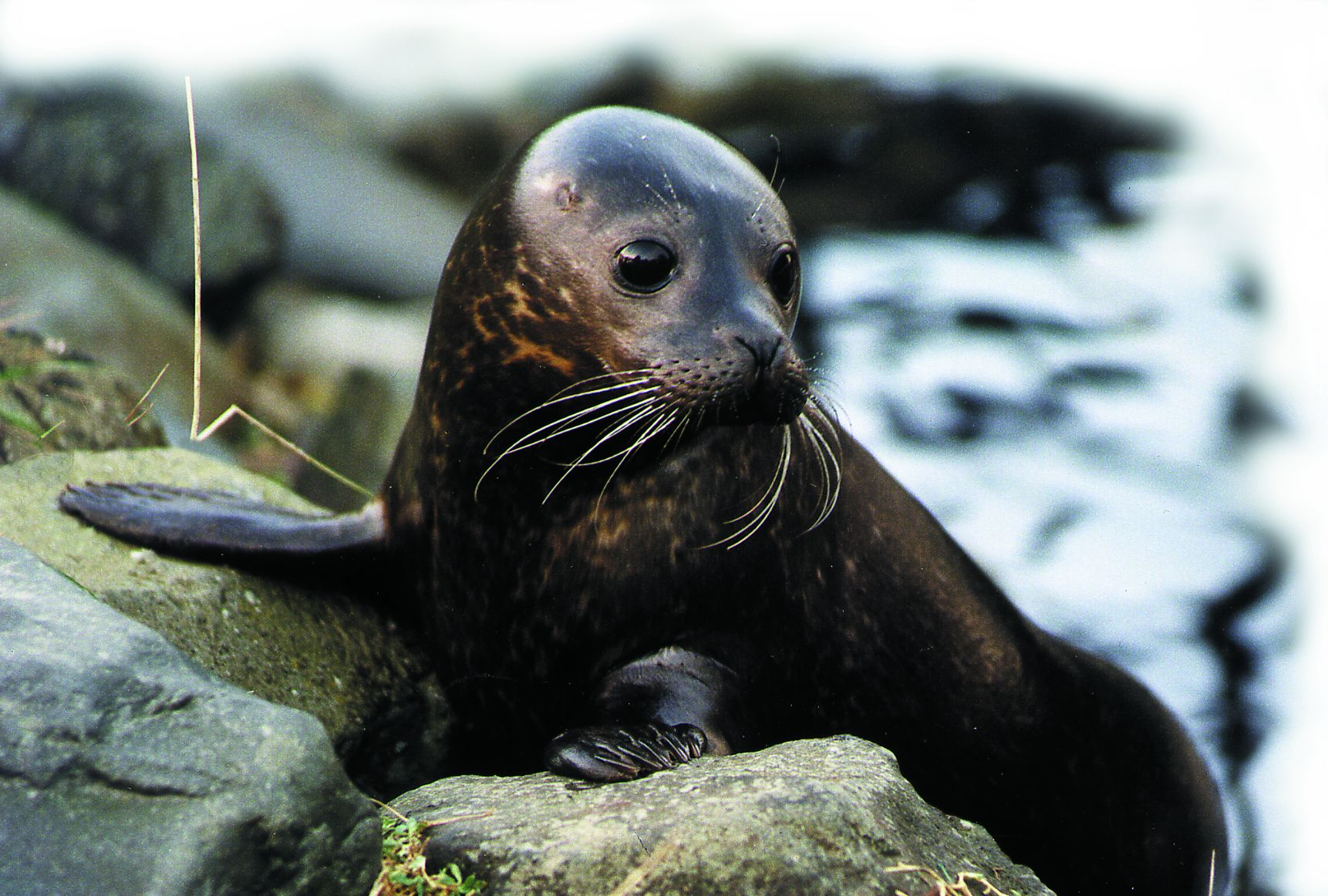 What do you look like in real life? Seal-03
