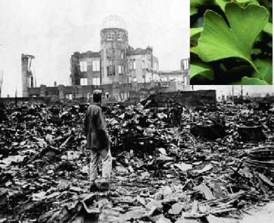El árbol misterioso de Hiroshima 1310551925