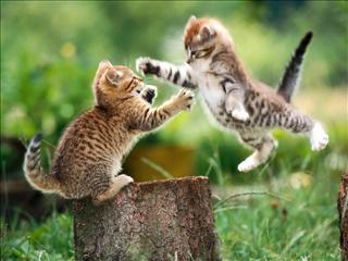 MEGADRIVE vs SUPER NINTENDO : Fight ! - Page 32 3392